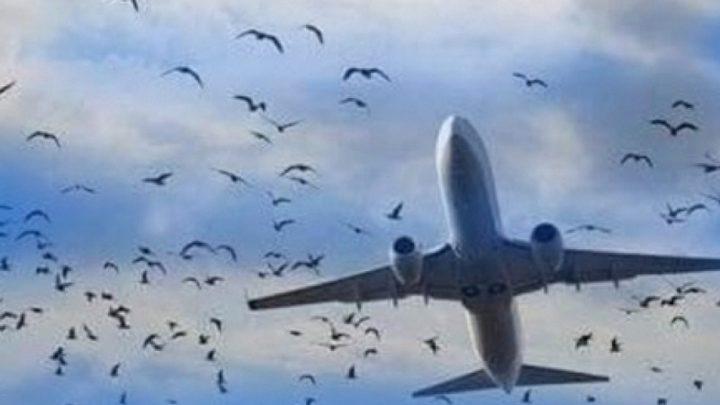 روسيا..طيور تجبر طائرة ركاب على الهبوط اضطراريا في حقل ذرة