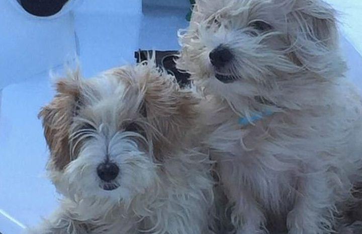 """أستراليا.. مسنان ينقذان كلبيهما من هجوم سحلية """"الأجوانا"""""""