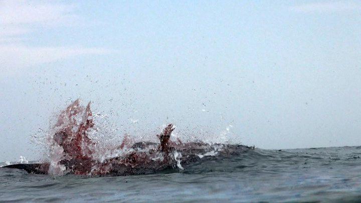 سمكة قرش تحول الماء إلى بركة دم