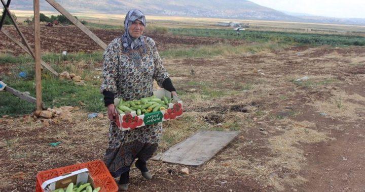 إخطارات بهدم منشآت زراعية في سهل البطوف في الداخل المحتل