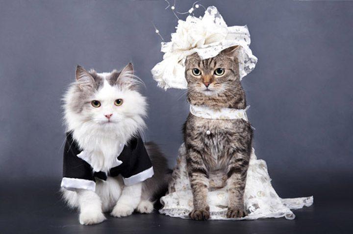 حفل زفاف قط وقطة يثير الجدل على مواقع التواصل الاجتماعي
