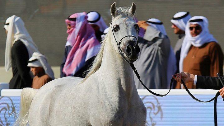 تقنية لعلاج الخيول بالتبريد أحدث صيحات التكنولوجيا في دبي