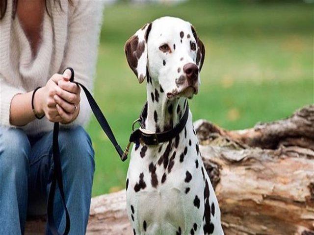 دراسة: امتلاك كلب يشجعك على التمتع بصحة نفسية وجسدية ممتازة