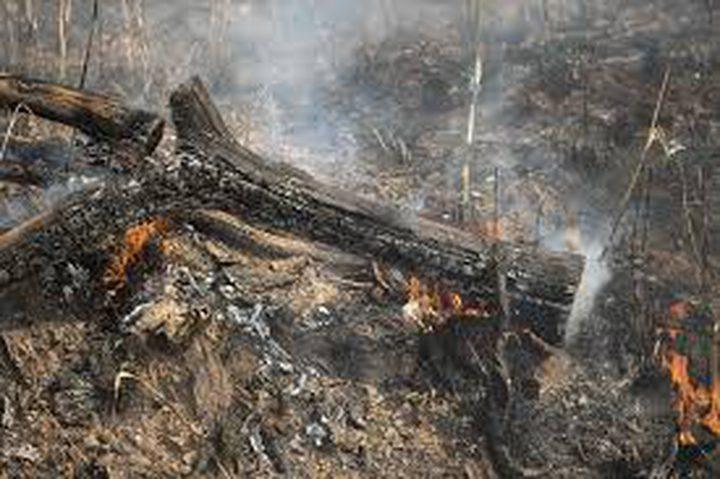 حرائق هائلة في الأمازون والبرازيل ترفض المساعدة