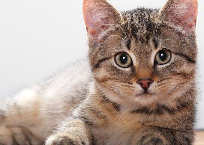 القطة نالا.. الأكثر شعبية عبر السوشال ميديا