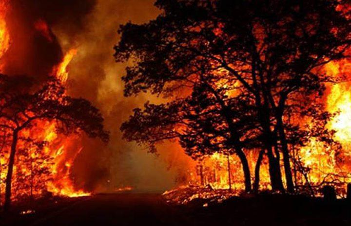 اندلاع حرائق كبيرة في الغابات الأسترالية مع بداية فصل الربيع