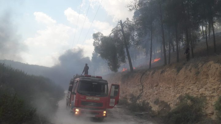 حريق يلتهم 300 دونم من حقول الزيتون في جنين