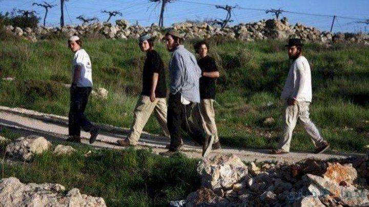 المستوطنون يعتدون على منازل ومركبات جنوب نابلس