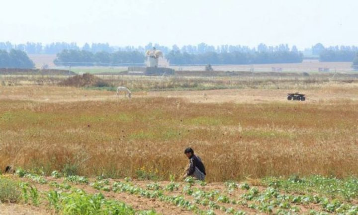 استهداف مزارعي شرقي غزة
