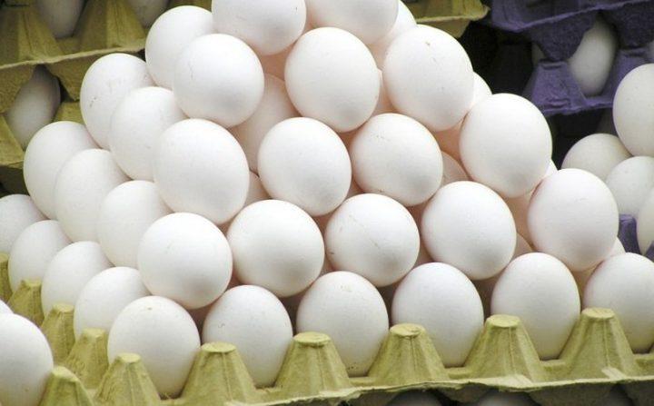 زراعة غزة تتلف نصف مليون بيضة بقطاع غزة منذ بداية العام الحالي