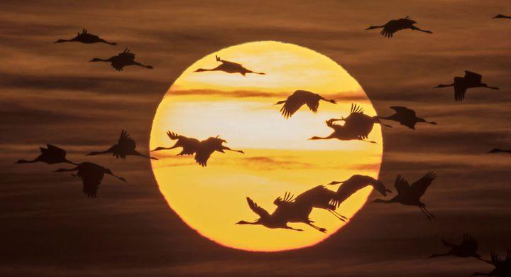 """تخليد ذكرى """"11 سبتمبر"""" يهدد حركة الطيور المهاجرة في نيويورك"""