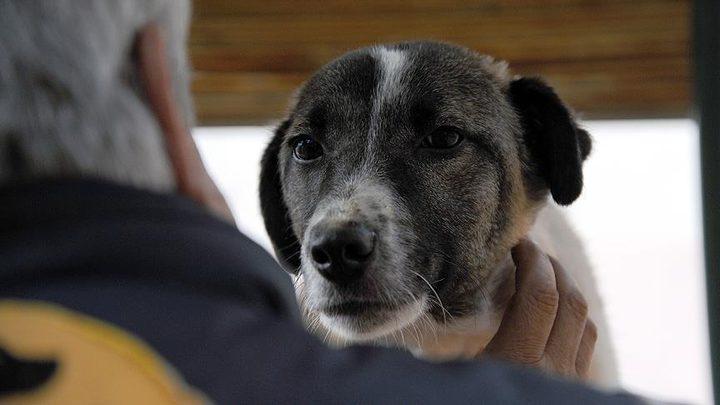 شاهد كلبة تحفر في أنقاض مبنى متهدم للعثور على جراءها
