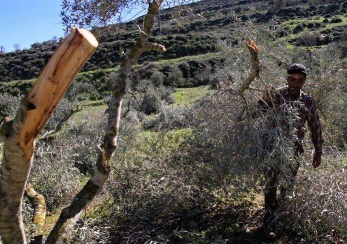 الاحتلال يعتدي باقتلاع عشرات الأشجار وهدم آبار في طوباس