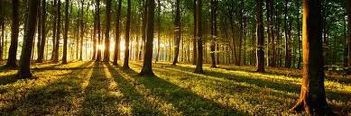 دراسة: التنزه في الغابات الخضراء أفضل وسيلة للتمتع بالاسترخاء