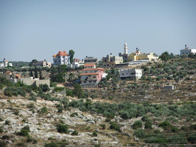 الاحتلال ينفذ مجزرة بحق عشرات أشجار الزيتون