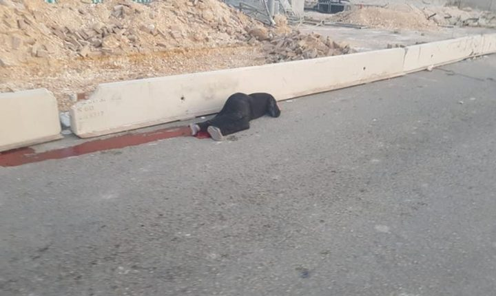 """""""أمنستي"""" تطالب بالتحقيق مع """"إسرائيل"""""""