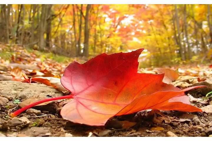 الصيف يُقاوم والخريف يبدأ بعد أسبوع