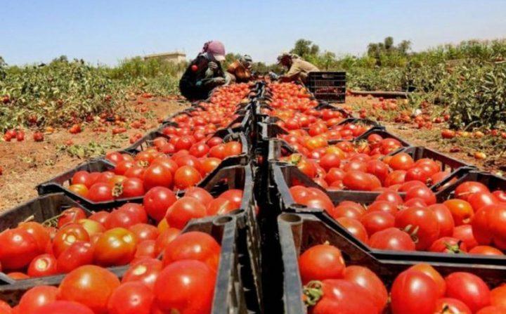 """""""الزراعة"""": قرار وقف استيراد 9 منتجات من """"اسرائيل"""" قديم"""