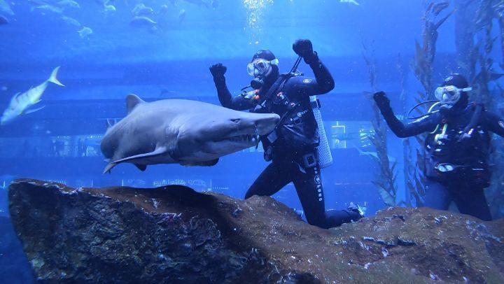 أحمد سعد ينجو من سمك القرش