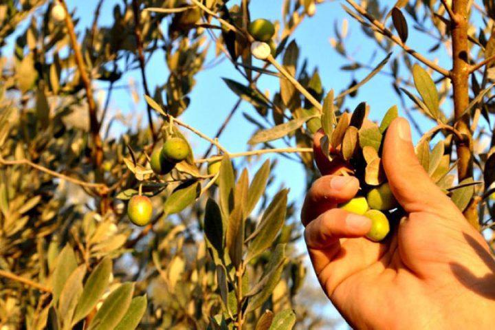 القوى الوطنية: الاحتلال يسعى لفصل المزارع الفلسطيني عن أرضه