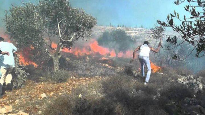 إخماد(6) حرائق في محافظة جنين