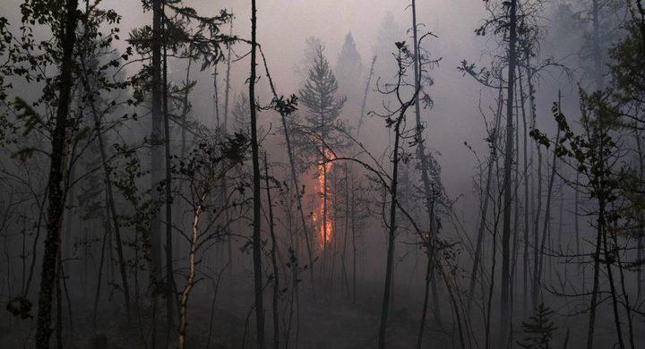 """""""جل"""" للقضاء على حرائق الغابات"""