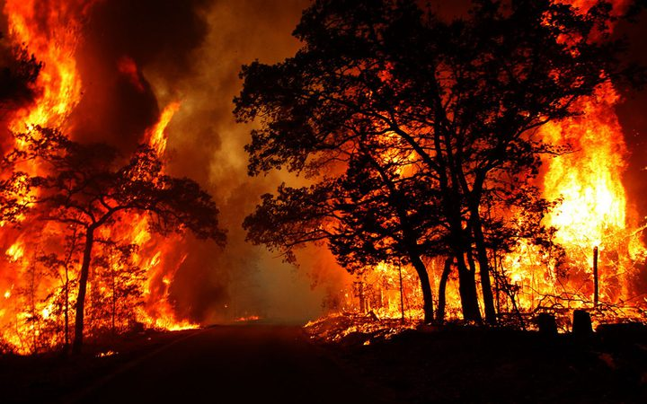 الدفاع المدني: احتراق نحو 450 شجرة زيتون ولوزيات غرب جنين