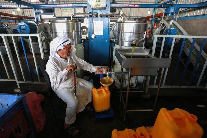 خلال عملية عصر الزيتون وتعبئته بمعصرة في دير البلح وسط قطاع غزة.