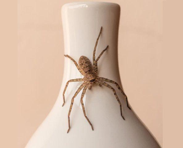 وصفات طبيعية لعلاج لدغات العنكبوت من المنزل