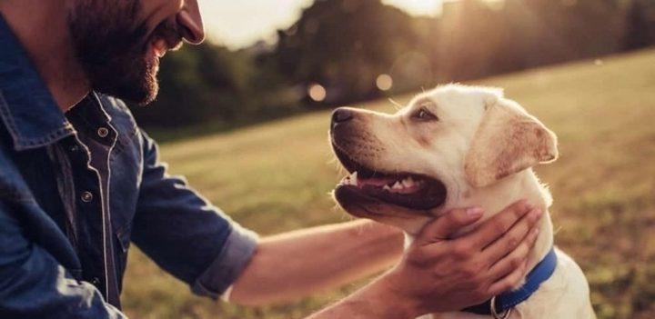دراسة أميركية: إقتناء كلب الوفي يساهم في إطالة العمر