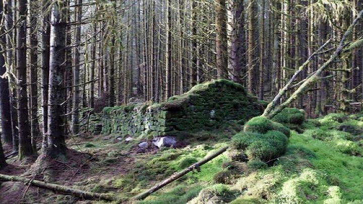 كشف سر بنايات قديمة في غابات اسكتلندا