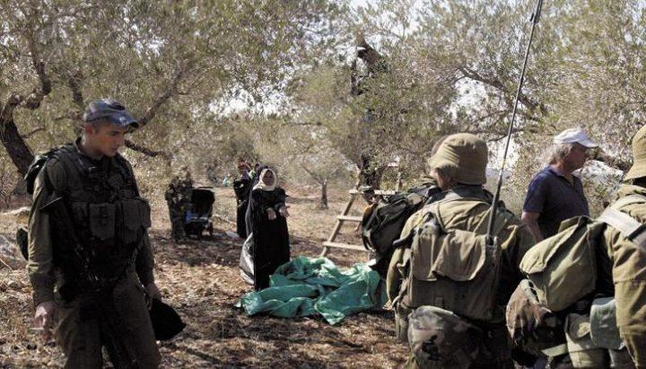 ارتفاع وتيرة اعتداءات الاحتلال والمستوطنين خلال موسم الزيتون