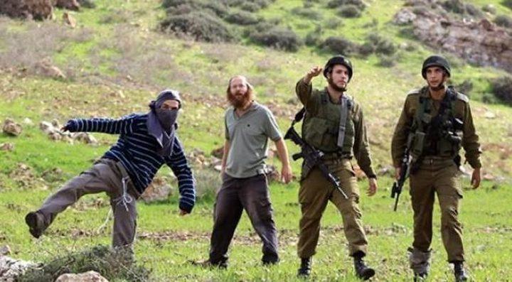 الاحتلال يعتدي على المشاركين بقطف الزيتون في اللبن الشرقي