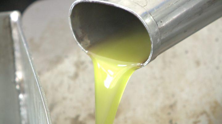 التزام المزارعين بتعليمات الزراعة ضاعف من انتاج الزيتون