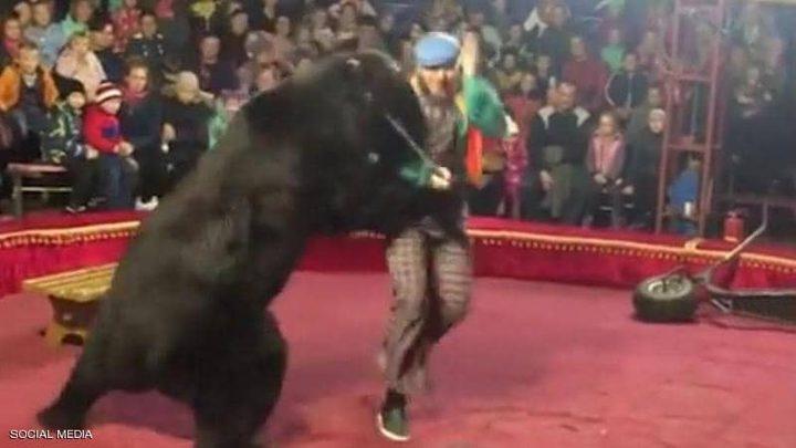 روسيا.. دب يهاجم مدربه أثناء عرض في سيرك