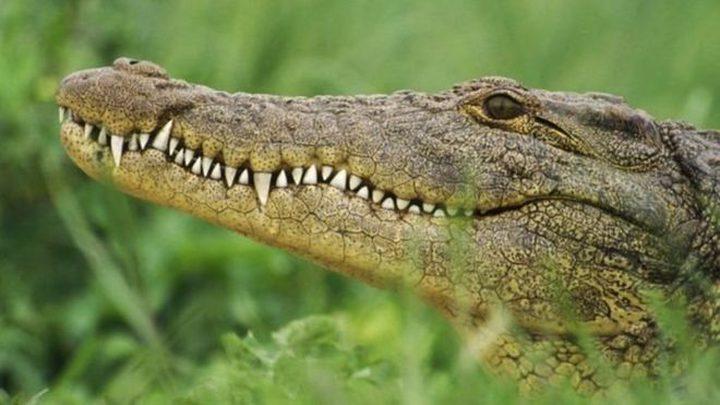 أستراليا..  تمساح ضخم يلتهم كلبا أمام أعين صاحبه !