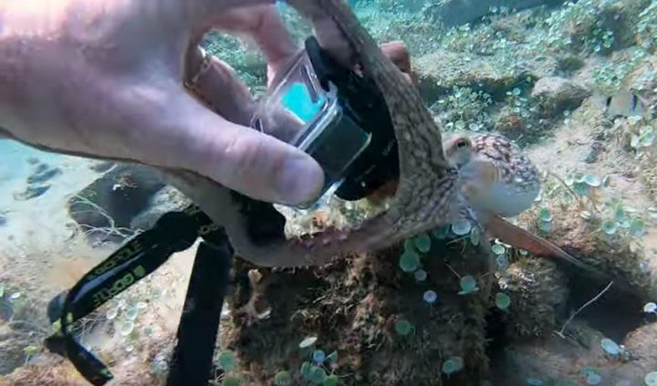 أخطبوط يسرق كاميرا غواص في أعماق البحار