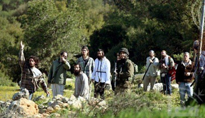 مستوطنون يسرقون ثمار الزيتون جنوب شرق نابلس