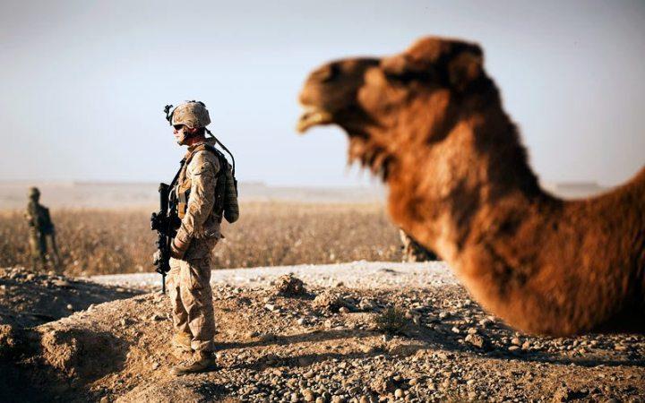 أبرز الحيوانات التي يتم تدريبها لخدمة الجيوش