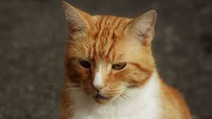 اعتقال روسي سحب قطا وأشهره في وجه أحد رجال الشرطة !