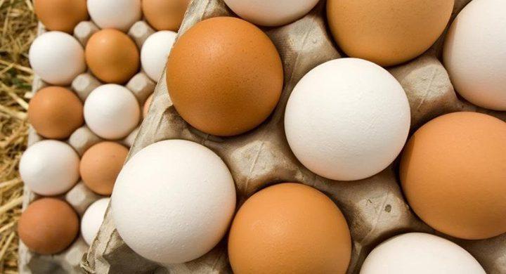 كم بيضة يجب أن تتناول يومياً