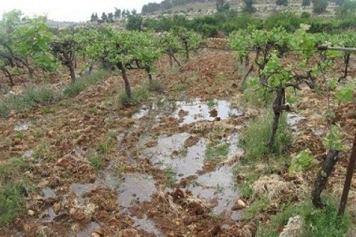 مستوطنون يغرقون أراضي زراعية بالمياه العادمة