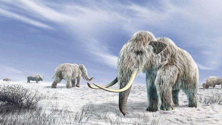العثور على 800 عظمة تعود لحيوان عاش قبل 140 قرنا !