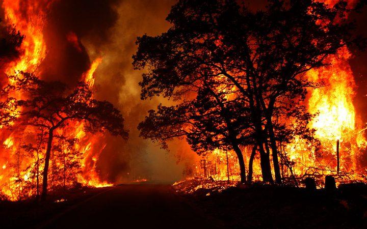الدفاع المدني: حريق يلتهم نحو 250 شجرة زيتون جنوب جنين