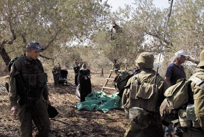 الاحتلال يمنع المزارعين من قطف الزيتون غرب نابلس