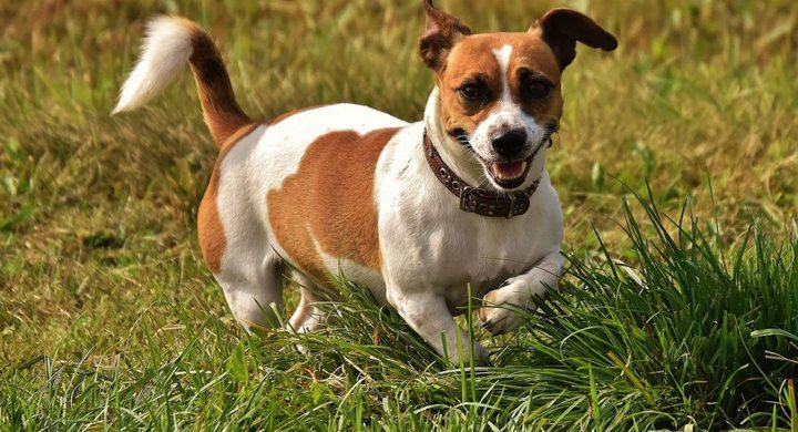 أخصائية علم نطق تعلم كلبتها 29 كلمة