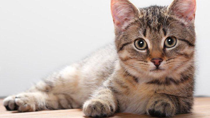 القطة ذات الوجهين خالفت التوقعات وعاشت 4 أشهر حتى الآن !