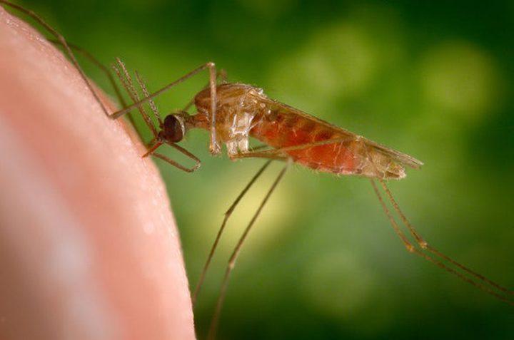 الصحة العالمية تسعى لتقليص عدد البعوض في العالم