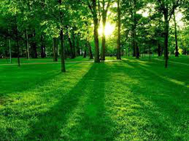 دراسة: العيش في المناطق المخضرة يطيل العمر