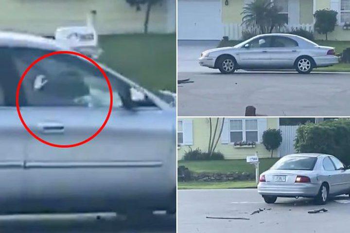 """شاهد كلب يقود سيارة """"إلى الخلف"""" لمدة ساعة كاملة !"""